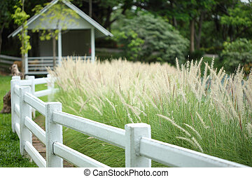 meadow with white fence