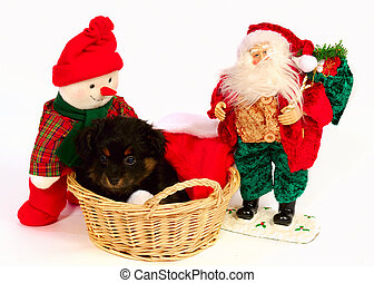 Yorkipoo Puppy Christmas Theme - A 2 month old Yorkipoo...