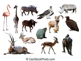 African animals  - African animals. Isolated on white