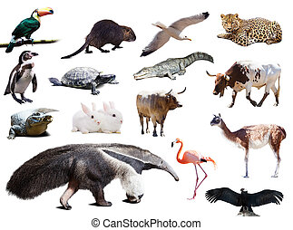 Set of anteater and other animals of South America over...