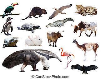 Conjunto, de, Oso hormiguero, y, otro, animales, de, sur,...