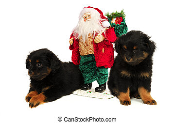 Sleepy Puppy Dogs with Santa - Twin Yorkipoo Puppies with...