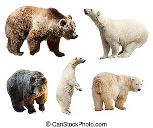 Set of bears. Isolated on white background