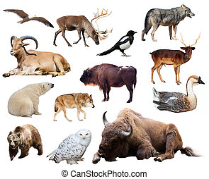 Set of bison and other european animals Isolated on white...