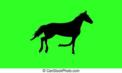 silhouette of a running horse. Green screen background. 4k...