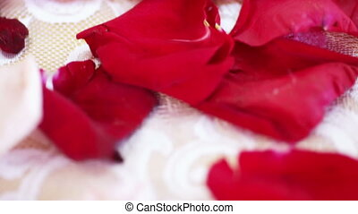 Rose petals on table - Lying on table petals in holiday
