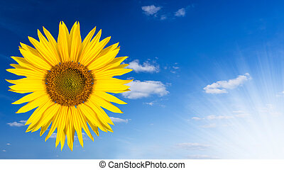 sunflower in the sky (clouds and sunlight)