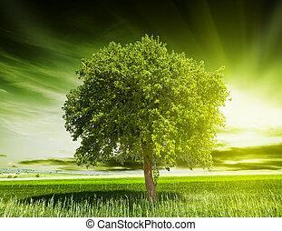 綠色, 樹, 自然