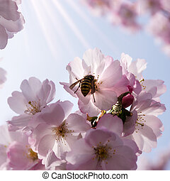 wasp on japanese cherry tree - wasp on a japanese cherry...