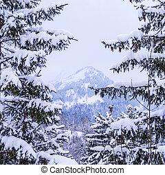 abete, montagna, albero