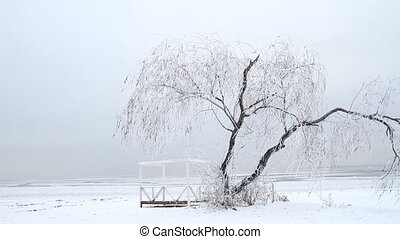 Lonely tree in winter with slider