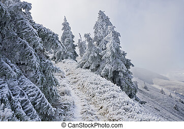 Winter trees in mountains