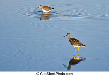 Two Sandpipers in Shallow Water