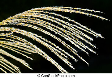 Nature Abstract - Pampas Grass
