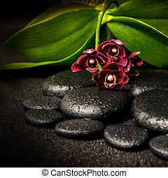 Spa still life of beautiful deep purple orchid flower,...