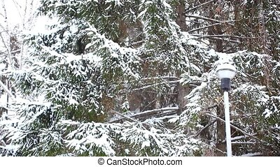 Snow covered tree spruce in winter time snowfall. Christmas background. HD. 1920x1080