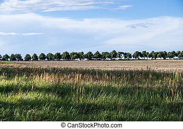 tree line in landscape in summer time