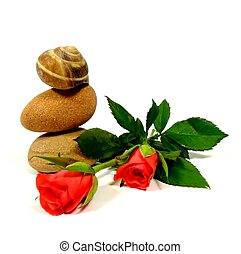 red roses with stones an snail