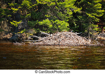 Beaver lodge in a lake in Saguenay, Quebec, Canada