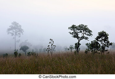 Early morning in tropical forest