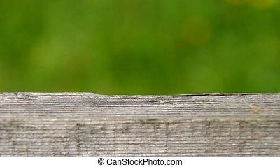 Spider Argiope bruennichi and woode - Spider Argiope...