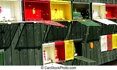 Colorful beehives and bees in nature