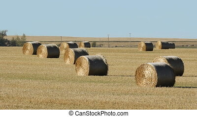 Hay bales in a field Alberta - Bales of hay in a field with...