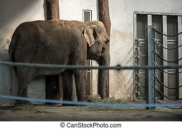African elephant in zoo behind cage closeup photo