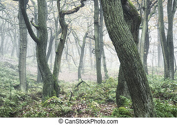 Landscape of forest with dense fog in Autumn Fall