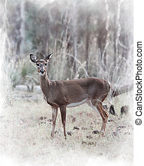 White-tailed Deer  - Digital Painting Of White-tailed Deer