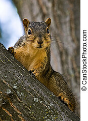 Curious Fox Squirrel On A Tree Branch