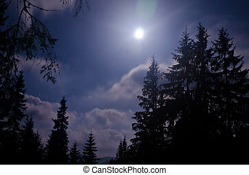 Starry night and dark forest Carpathisn Mountains Ukraine