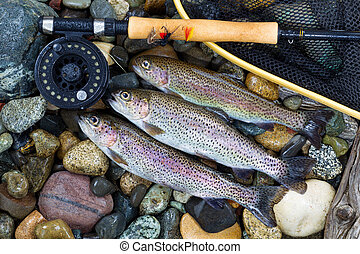 Trout Fishing Success - Overhead view of three wild trout...