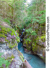 MT-Glacier National Park - Avalanche Creek is the place to...