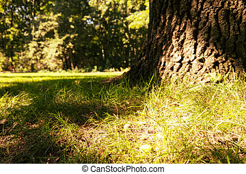 tree trunk and sunlight in a forest