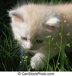 First Kitten Step