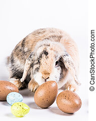 easter rabbit with eggs - brown rabbit sitting behind some...
