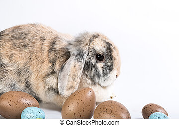 brown easter rabbit - brown rabbit sitting behind some...