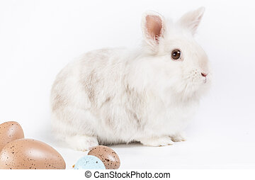 easter rabbit - white rabbit with some brown eggs in front...