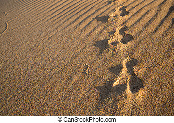 Rabbit tracks in the sand dunes