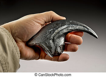 Velociraptor Claw. - Velociraptor claw also called raptor.