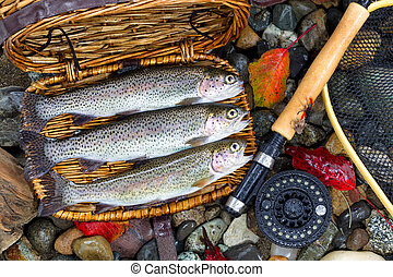 Creel with Native Trout - Top view of native wild trout,...
