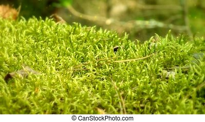 Forest moss, with flying particles