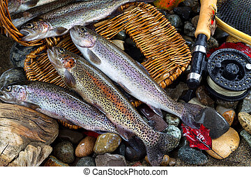 Trout Spilling out of Creel - Wild trout spilling out of...