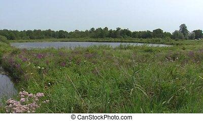 Dutch peat bog landscape + pan windmill (spider mill) used...