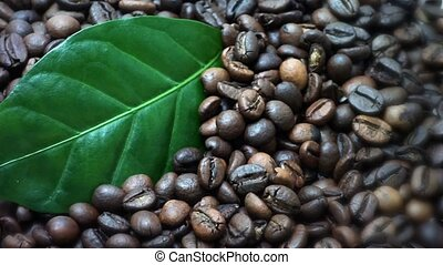 Coffee beans. Coffee tree leaves