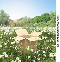cardboard box on the grass field