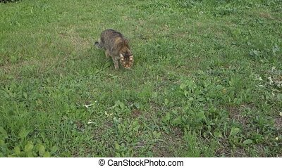 Cat walking on farm garden summer grass