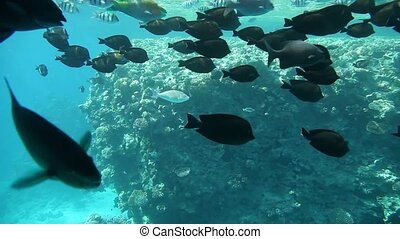 Variety of fish in tropical waters - Underwater footage of...