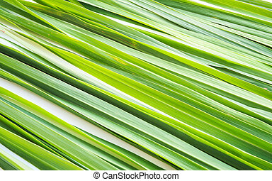 Lemongrass leaf